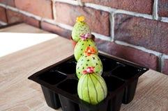 Matlagningmästerverk Vårplantor växthus Kaktusblomning lyckliga easter Naturlig färg gjord easter äggbild grön livstid blommaillu arkivbild