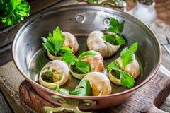 Matlagningsniglar med vitlöksmör och persilja Arkivfoto