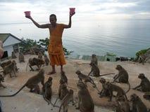 Matning av aporna i tempel på berget Arkivfoto