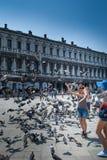 Matning av duvorna i piazza San Marco i Venedig Arkivfoto