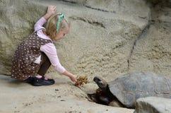 Matning av en sköldpadda arkivbilder