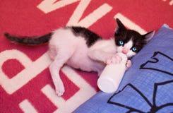 Matning av kattungen med en mjölkareplacer Arkivfoton