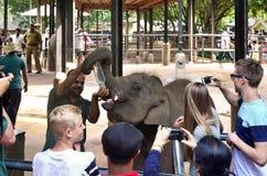 Matning mjölkar för att behandla som ett barn elefanten (Elephasmaximusmaximus) i en barnkammare i Sri Lanka royaltyfria foton