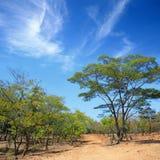 Matobo National Park. The Bush in Matobo National Park, Zimbabwe Royalty Free Stock Photography