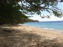 Matopalo, Costa Rica zdjęcia stock