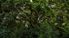 Matorral del bosque Imagen de archivo libre de regalías