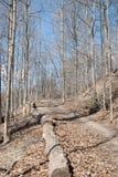 Matorral del bosque de la primavera Imagenes de archivo