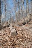 Matorral del bosque de la primavera Fotos de archivo