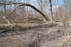 Matorral del bosque de la primavera Foto de archivo libre de regalías