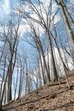 Matorral del bosque de la primavera Imagen de archivo