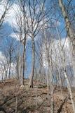 Matorral del bosque de la primavera Imágenes de archivo libres de regalías