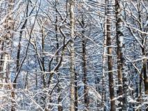 matorral en bosque nevoso en día de invierno soleado Foto de archivo