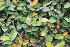 Matorral verde denso de plantas ornamentales tropicales Fotos de archivo