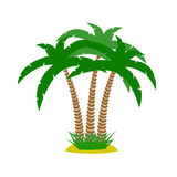 Matorrales de palmeras en un fondo blanco Imagen de archivo