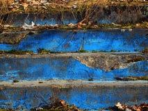 Matorrales de pasos azules con la hierba de la edad avanzada Imagenes de archivo