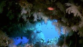 Matorrales del coral suave colorido en el filón en el océano almacen de metraje de vídeo