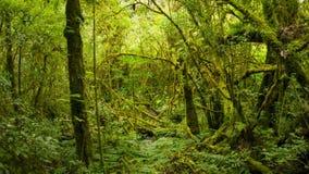Matorrales del tiro tropical de la selva tropical con el enfoque tailandia almacen de video