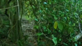 Matorrales verdes de árboles tropicales en follaje salvaje del Forest Green y ramas de plantas tropicales y árboles en selva trop almacen de video