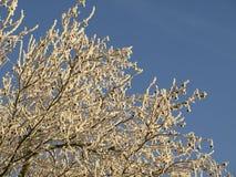 matowe drzewa Obrazy Royalty Free