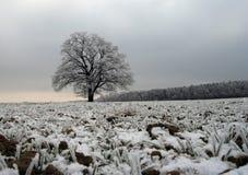 matowe drzewo Zdjęcia Royalty Free