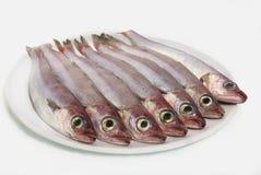 maträtten fiskar ny white Arkivfoto
