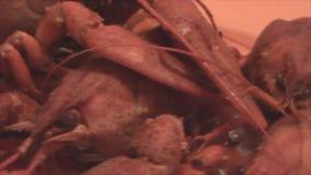 Maträtten med humret i en rund rörelse Hummer i förhöjningen lager videofilmer