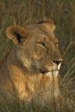 Matriarch van Mara Royalty-vrije Stock Afbeeldingen