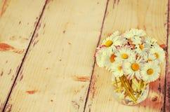 Matricaria chamomilla Stockfotografie