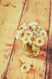 Matricaria chamomilla Stockfoto
