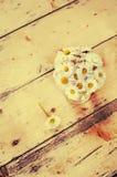 Matricaria chamomilla Lizenzfreie Stockfotos