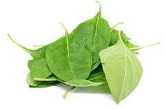Matrimony vine leaf. On the white background Royalty Free Stock Photo