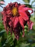 matris blomma royaltyfri fotografi