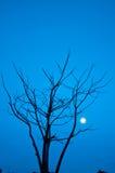 Matris tree Royaltyfria Bilder