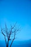 Matris tree Royaltyfri Bild