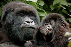 Matriz e bebê Foto de Stock Royalty Free