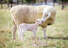 Matriz e filho 2 Imagem de Stock Royalty Free