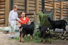 A matriz e o filho alimentam com filiais das cabras de montanha Fotografia de Stock