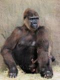Matriz que protege seu bebê Fotografia de Stock Royalty Free