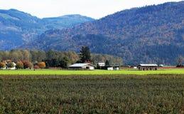 Matsqui Prairie Farmland Autumn Scene. A peaceful autumn scene of farmland and buildings in the Matsqui Prairie area of the Fraser Valley in British Columbia Royalty Free Stock Photo