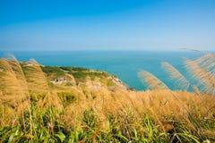 Matsu Juguang Island Tall Grass H Stock Photo