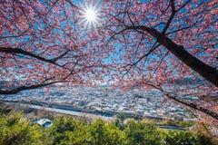 Matsuda Sakura Festival Arkivfoto