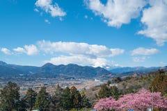 Matsuda Sakura Festival Royaltyfria Foton