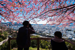 Matsuda Sakura Festival Royaltyfri Fotografi