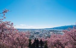 Matsuda Sakura Festival Royaltyfri Bild