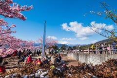 Matsuda Sakura Festival Arkivbilder