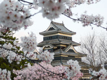 Matsumoto Castle during cherry blossom (Sakura) stock image