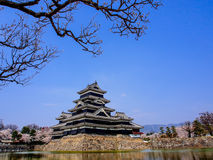 Matsumoto castle with sakura blossom , Matsumoto, Japan 13 Stock Images