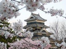 Matsumoto-Schloss während der Kirschblüte (Sakura) Stockbild