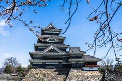 Matsumoto slott under körsbärsrött blomma, Japan Royaltyfri Bild