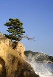 Matsushima Royalty-vrije Stock Fotografie